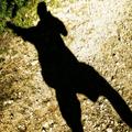 Der Schatten des Grauens