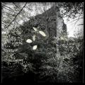 Ruine Zuzenhausen